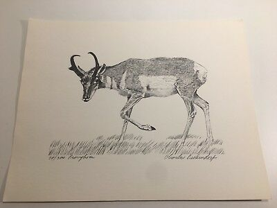 Charles Beckendorf. PROVYHORN Limited Signed 11x14 Print