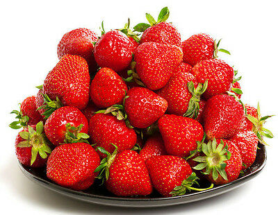 50 Albion Ever Bearing Strawberry Plants - Certified Healthy Bare Root Plants