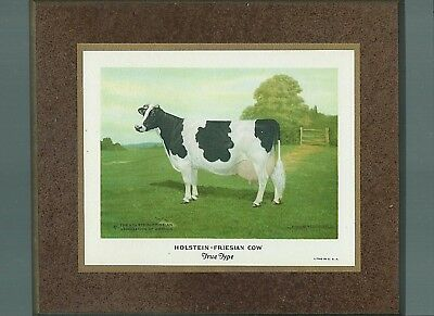 True Type COW wooden plaque Holstein-Friesian Association of America 1922 litho