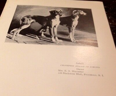 Vintage Book Page - 1927 - Saluki + Samoyed Champion Dogs