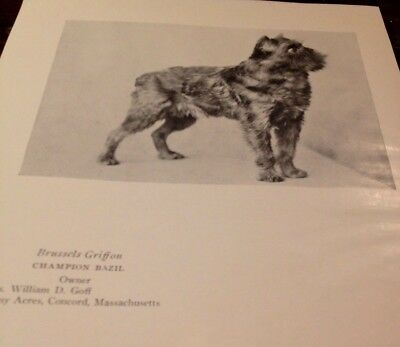 Vintage Book Page - 1927 - Brussells Griffon + Briard Champion Dogs