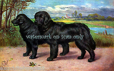 Antique Art~Black Newfoundland Dogs~Tranquil Background~NEW Large Note Cards