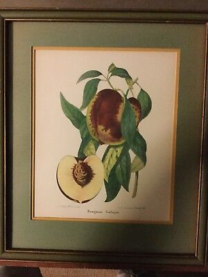 Antique Art print (French) Still Life  Original Vintage Wooden Frame. Rare