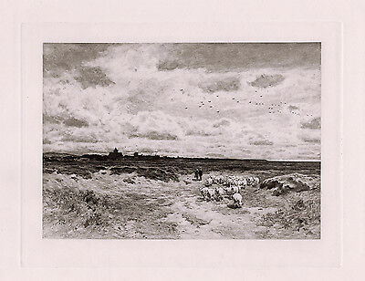"Stunning 1800s George REID Antique Print ""Sheep of Dornoch Scotland"" SIGNED COA"