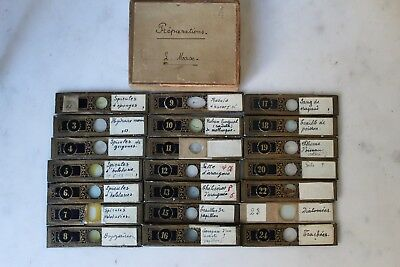 Fine Antique Collection Of 21 Microscope Slides By Conrad Von Rappard