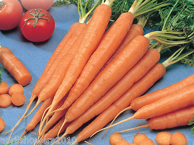 Carrot Tendersweet  Sweetest Carrot! A.A.S. Winner! 600+SEEDS COMBINED SHIPPING