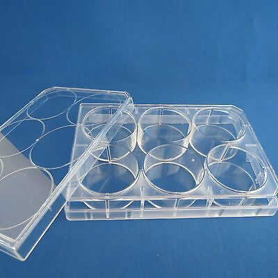 10 Plates 6 Well Cell Culture Clear Flat Bottom Mulitwell Plates & Lids  # 35440