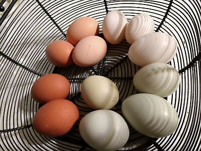 "12 Fresh Hatching Eggs -  Barnyard  ""Common & Rare Breeds"" mix. Multiple rooster"