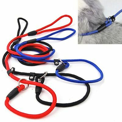 Pet Collar Cute Nylon Rope Training P Leash Slip Lead Strap Adjustable Traction