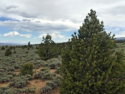 10 Acres Bryce Ut Garfield County Beautiful Country Clean Air Views!