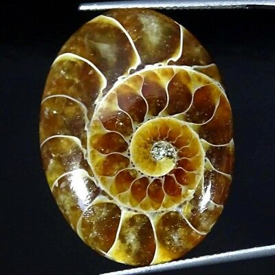 29.80Cts Natural Ammonite Fossil Oval Cabochon Loose Gemstone