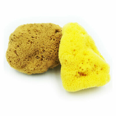 Natural Sea Sponge Fina Silk Mediterranean Cosmetic Bath or Baby - Size Options