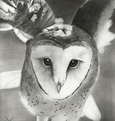 "Barn Owl /""Forward/"" Tyto alba Original Graphite Drawing PRINT Raptor Bird Nature"