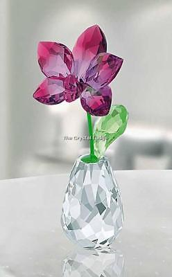 Swarovski Crystal Flower Dreams Orchid 5254318 Mint Boxed Retired Rare