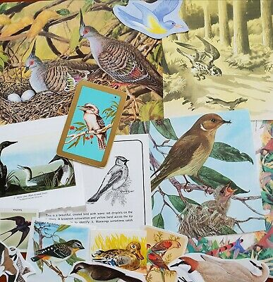 Vintage paper birds bird theme 16 pictures ephemera for art craft cards collage