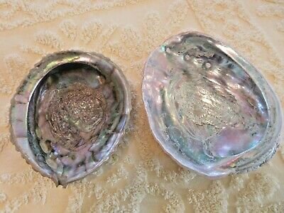 Two Very Nice Abalone Shells
