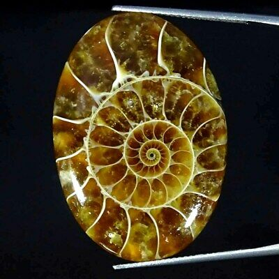 38.70Cts Natural Ammonite Fossil Oval Cabochon Loose Gemstone