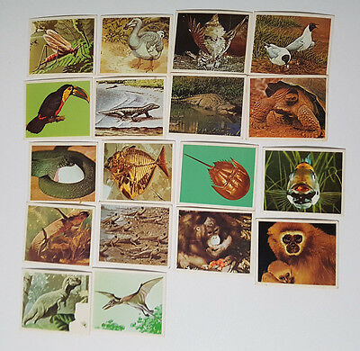 Weet Bix Cards 18 Cereal Cards Yesterday And Today Animals Dinosaurs