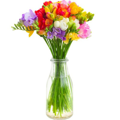 Fresh Freesia Fusion Flowers with Free Delivery - A Simple and Scented Bouquet a