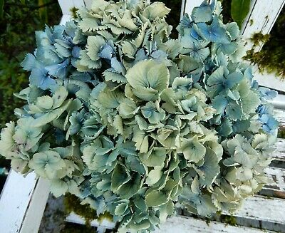 9 Dried Hydrangea Flower Lt. Blue, Green + Cream Wedding Rustic DIY Farmhouse