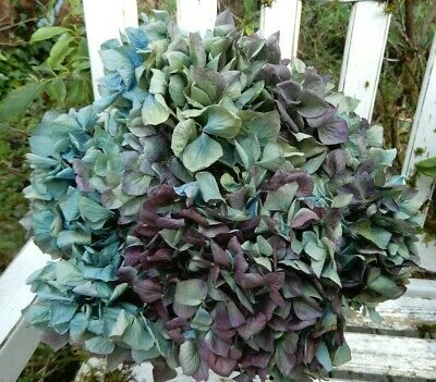 9 Dried Hydrangea Flowers Lt. Blue, Green. Cream + Purple Wedding DIY Farmhouse