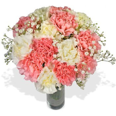 Fresh Pretty Carnation Flowers with FREE Delivery - A long lasting and luscious