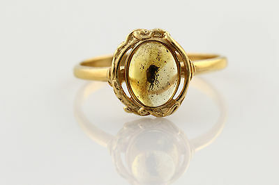 Fossil Insect Genuine BALTIC AMBER Silver Gold Plated Ring 7.25 r160316-6