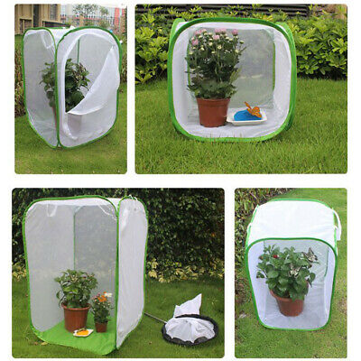 Light Transmission Small Insect Cage Butterfly Pop-up Housing Enclosure Sturdy