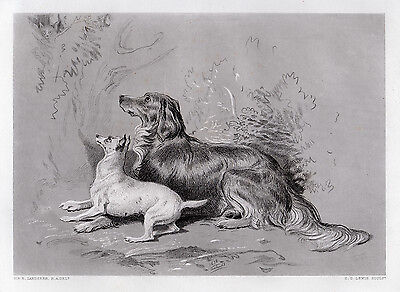 "Neat 1800s Edwin Henry Landseer Antique Engraving ""The Puppy Chase"" SIGNED COA"