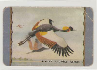 1  Single  Swap  Card   -   Coles / African  Crowned  Cranes