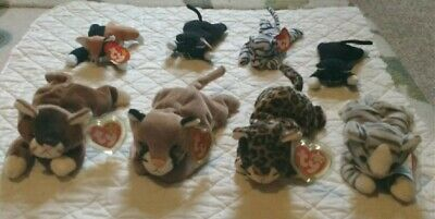 Ty Beanie Baby Babies Collectible Lot Of 8 Cute Cats