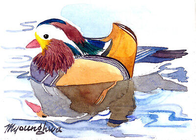 ACEO Limited Edition - Mandarin duck
