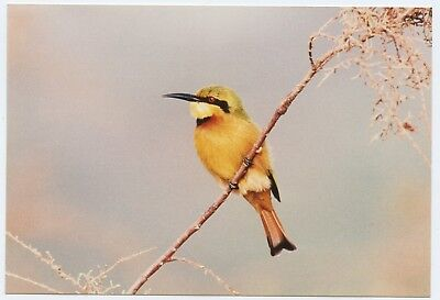 """A 6x4"""" photograph of a Bee Eater maybe (?) bird on Kodak paper"""