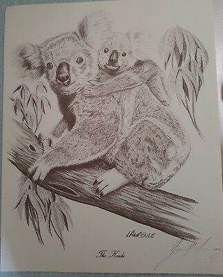 Koala drawing by John Lawrence
