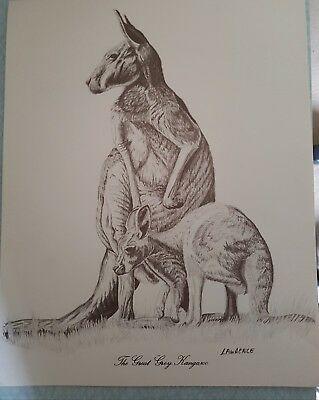 Kangaroo drawing by John Lawrence