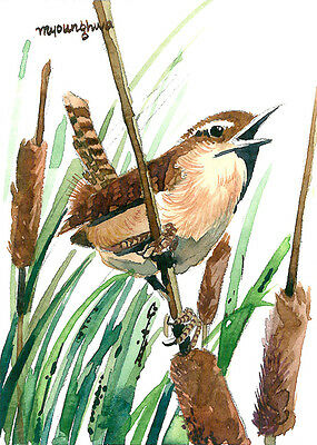 ACEO Limited Edition, Marsh Wren, Bird art print of an ACEO original watercolor