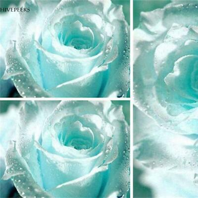 20/50Pcs Light Blue Rose Flower Seeds Romantic Home Garden Plant Rose H1PS