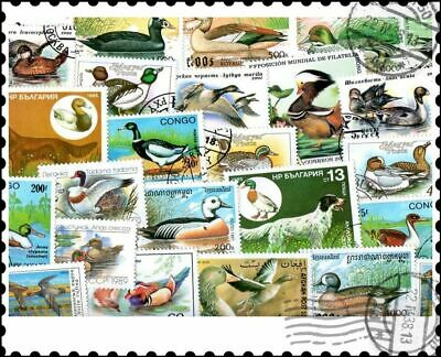 Ducks : 25 Different Stamps Collection