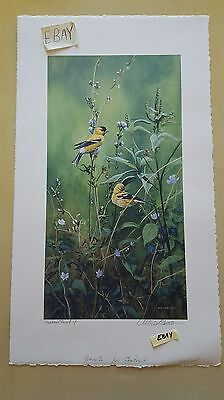 Michael Budden Proof Printers Print American Goldfinch Handmade Paper