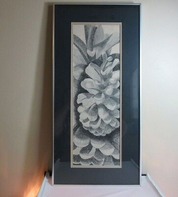 1980 signed pencil drawing of Pine cone. Framed. B. Peterson. Large