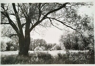 """Authentic Silver Gelatin analogue photo print """"A5"""""""