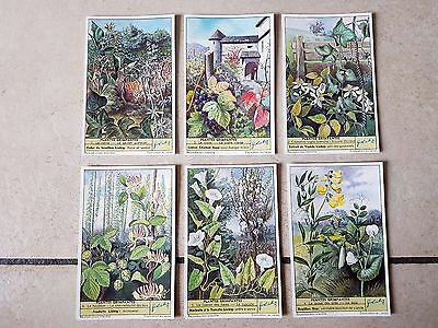 Lot chromos images cartes LIEBIG PLANTES GRIMPANTES collection cromoterapia 染色体