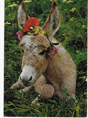 Greece donkey postcard