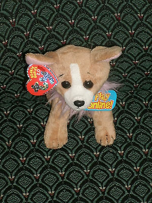 "Ty Pico The 2.0 Beanie Chihuahua Dog  6"" Tall - Unused Code  - 2009 -  Mwmt"