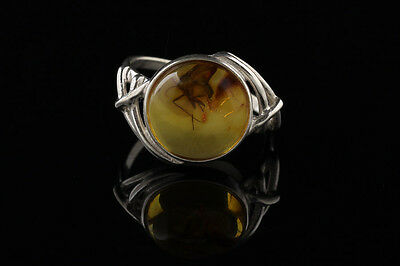 Fossil Insect FUNGUS GNAT - BALTIC AMBER Silver Ring 7.25 r130918-5