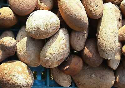 Natural Flint Chert 1 Kg Round Stones for Knapping and Decoration from Holy Land
