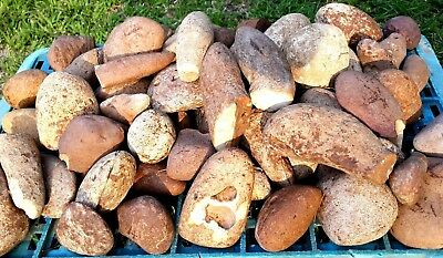 0.5Kg Natural Round Smooth Flint Chert Stones for Decoration from the Holy Land