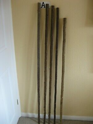 Five new long hazel walking stick shanks seasoned and steam straightened