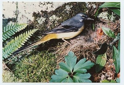 """A 6x4"""" photograph of a unknown bird Swallow maybe(?) on Kodak paper chicks nest"""