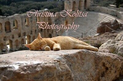 Digital Photography Backdrop Landscape Greek Cat Ancient Athens Theatre Postcard